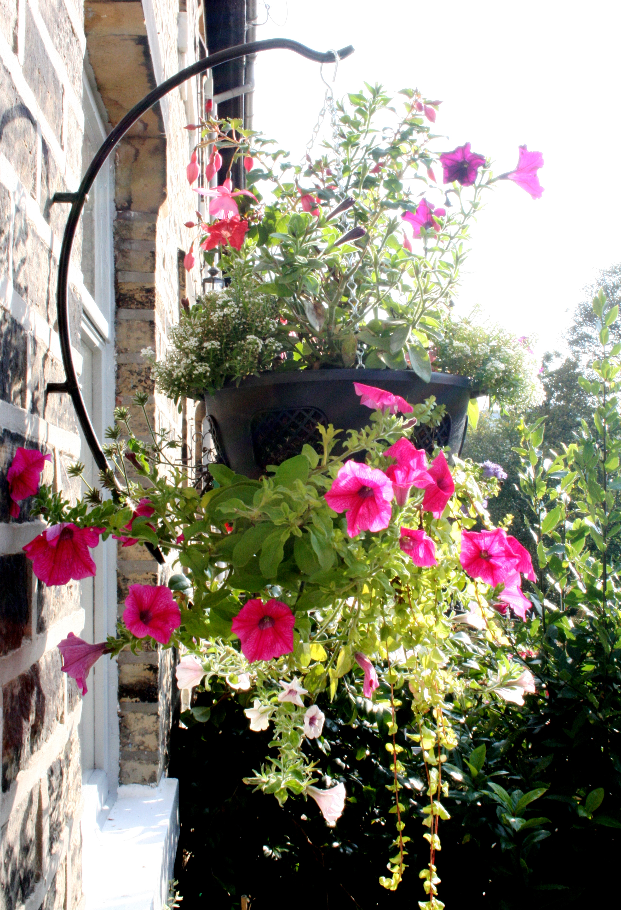 Hanging Flower Basket Supplies : What plants to put in hanging baskets garden features ideas