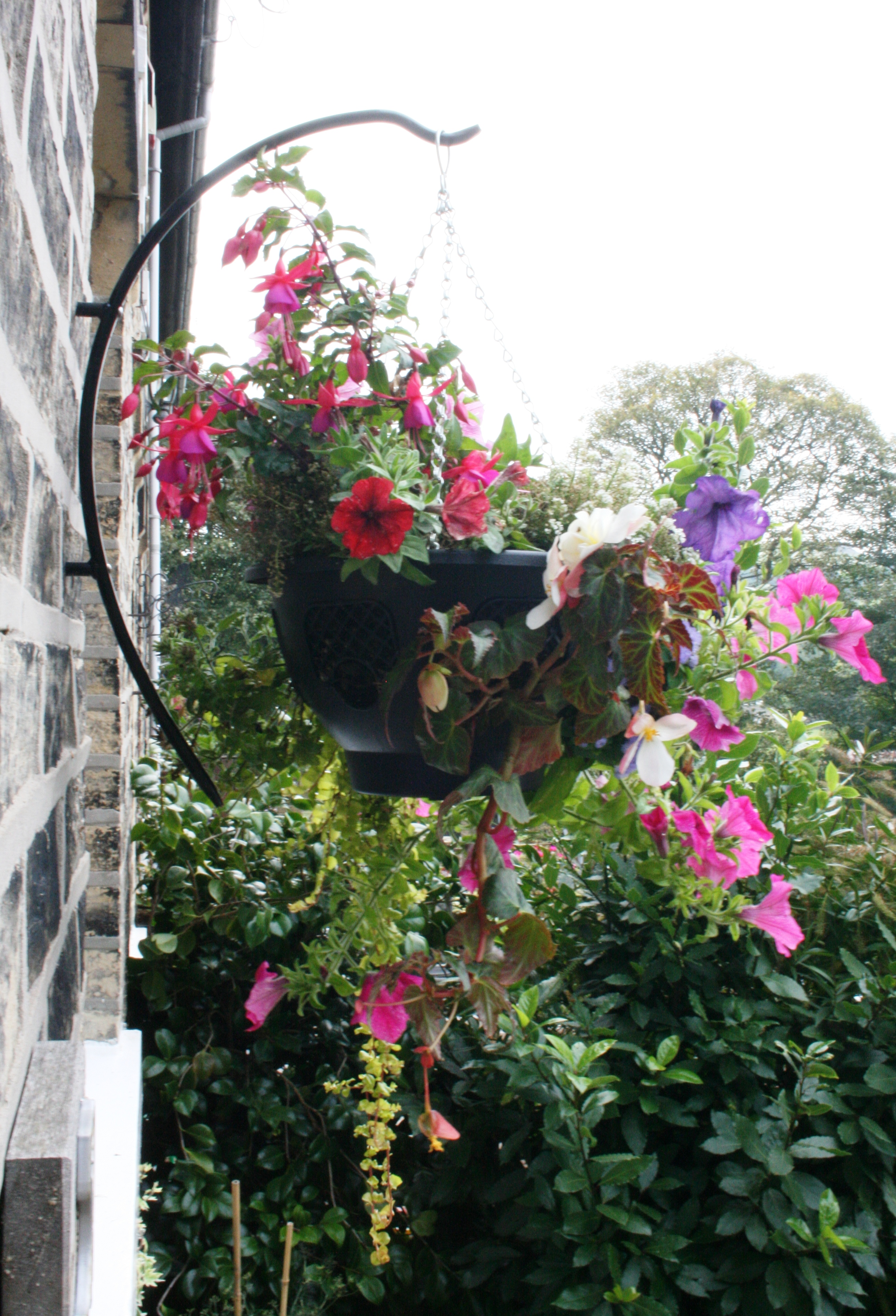 Planting Flowers In Hanging Baskets : What plants to put in hanging baskets garden features ideas