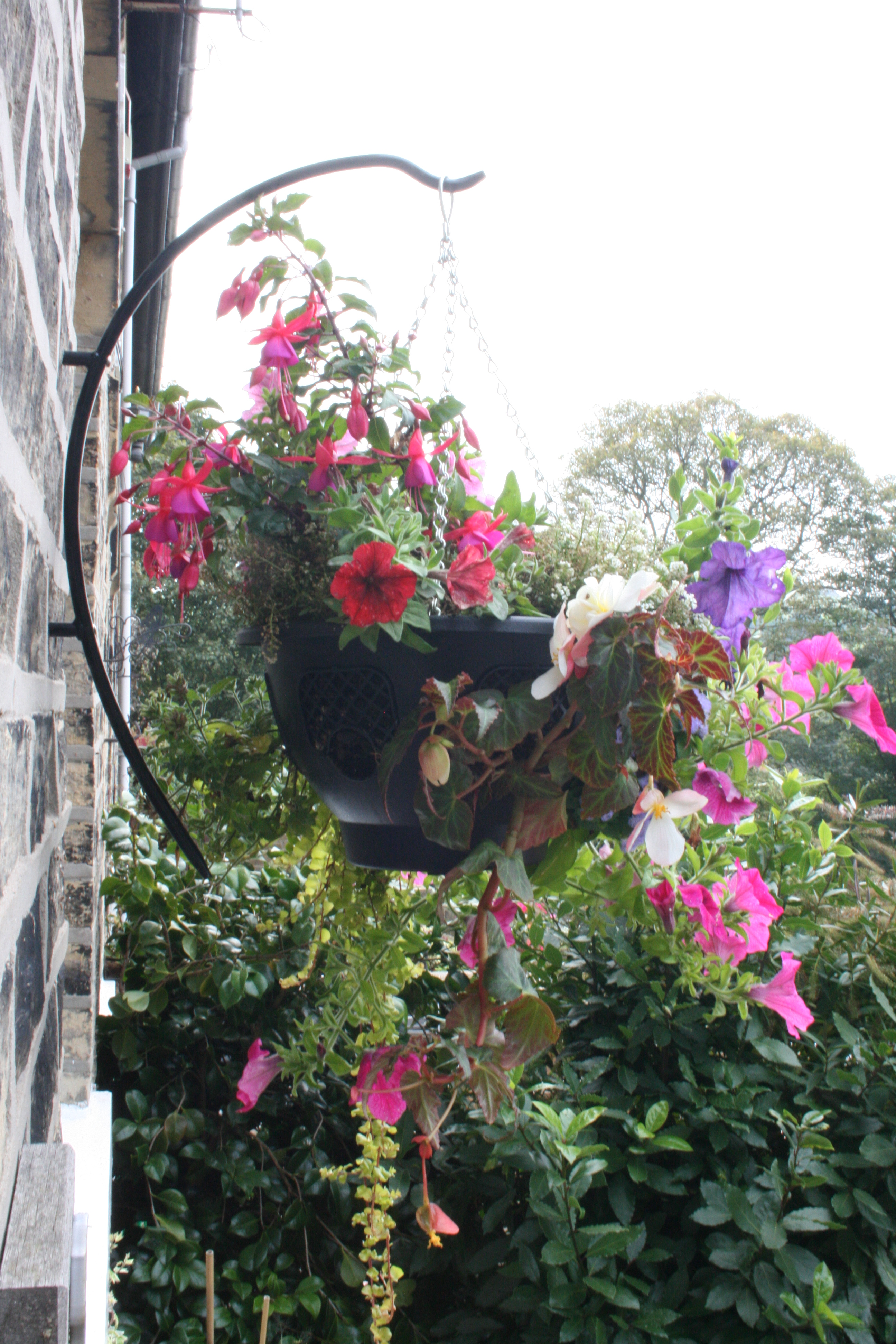 How to Plant Hanging Baskets | Garden Features Ideas on Plant Hanging Ideas  id=41920